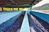 ヒメマス稚魚養殖の様子:養殖施設